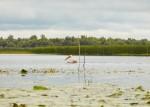 Ruta Albastra - Excursie O zi in Delta
