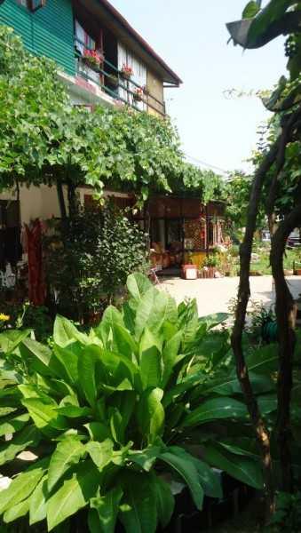 Foto Hotel Haris Costinesti