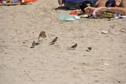 Si noi ne simtit bine pe plaja!